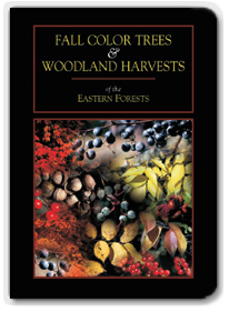 Fall Color Trees and Woodland Harvest DVD
